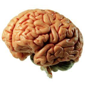 Claves del neuromarketing para conquistar el consumidor